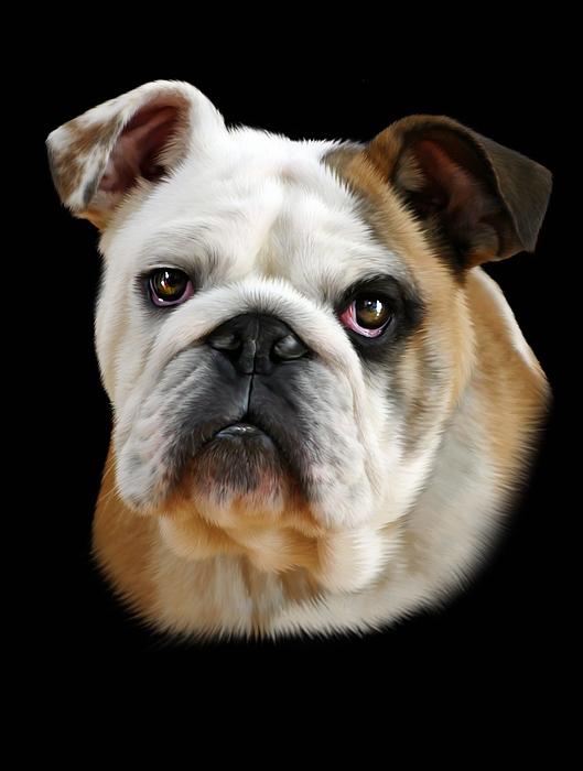 Bulldog Digital Art - Llewellyn by Julie L Hoddinott