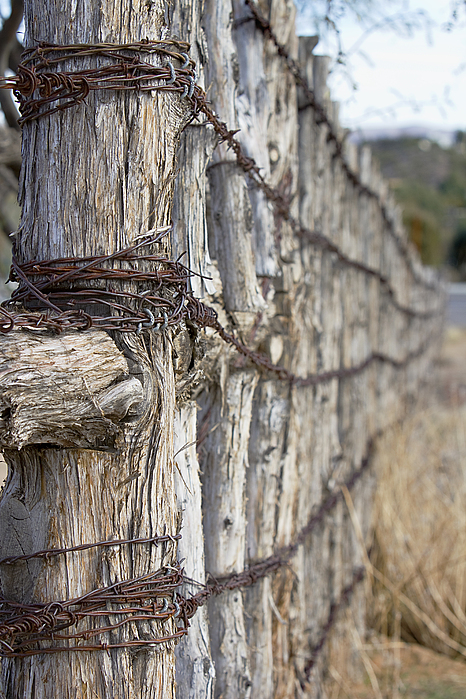 Fence Photograph - Log And Wire Fence by Phyllis Denton