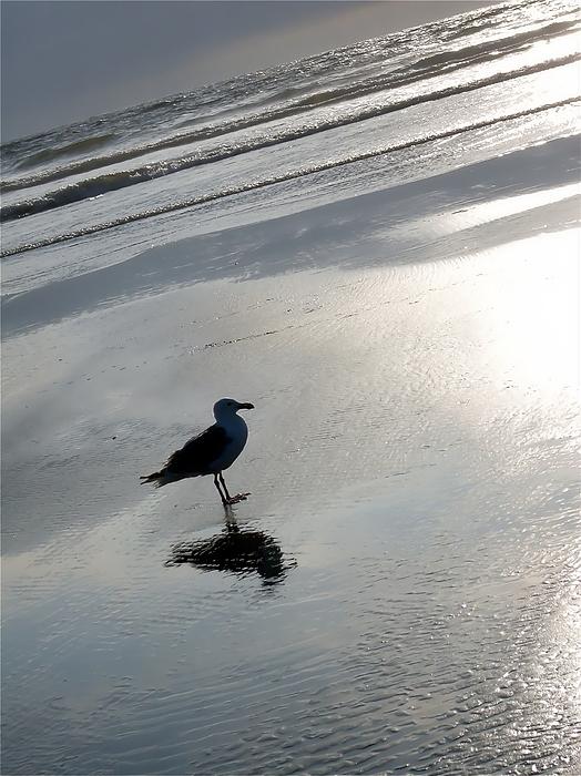 Seagull Photograph - Lone Gull by John Winner