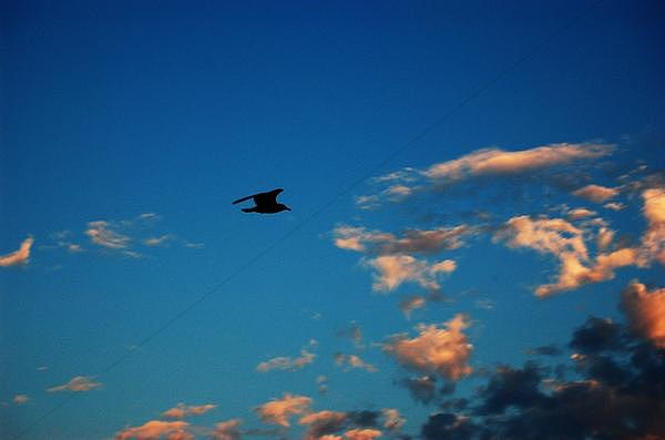 Birds Photograph - Lone Seagull by Chelsea Jones