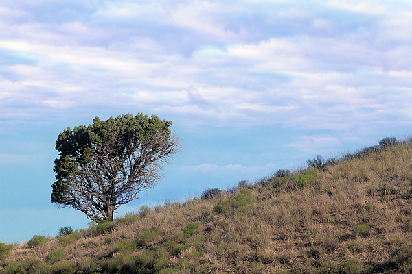 Tree Photograph - Lone Tree On Hillside In Central Oregon High Desert by David Gn