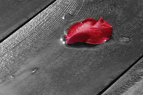 Rose Digital Art - Lonely Petal by Marrissia Ruth