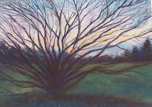 Longwood Gardens Pastel - Longwood Tree At Sunset by Laura McMillan