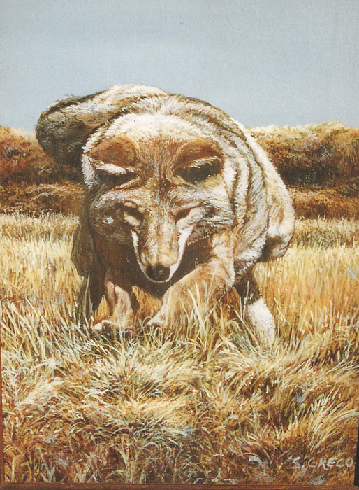 Coyote Painting - Looking For Lunch by Steve Greco