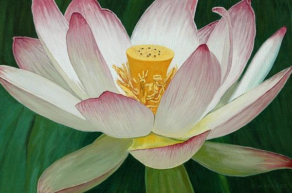 Flower Painting - Lotus Of Awakening by Allan OMarra