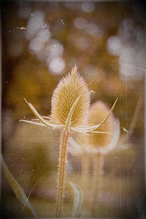 Flower Mixed Media - Loveletter by Steve K