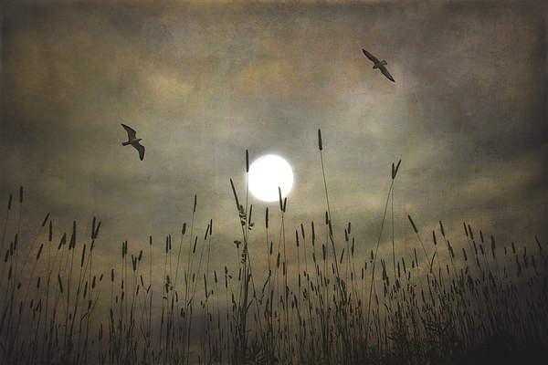 Nature Photograph - Lovers Moon by Tom York Images