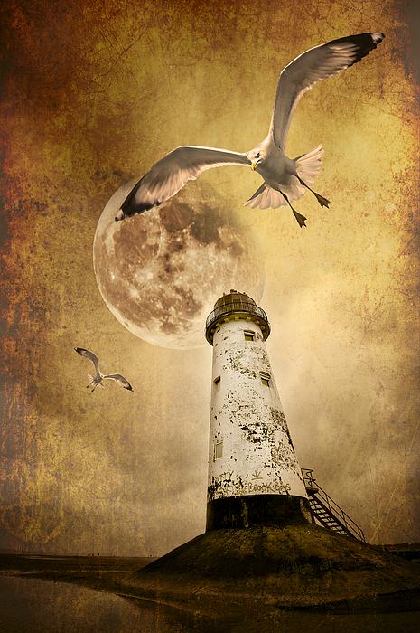 Seagull Photograph - Lunar Flight by Meirion Matthias