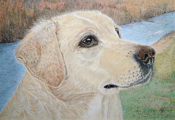 Labrador Retriever Drawing - Lynwater Sunny Alex by Yvonne Johnstone