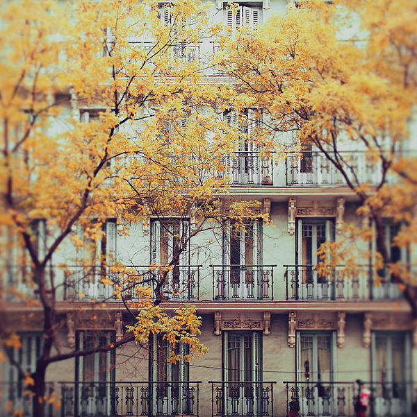 Vertical Photograph - Madrid Facade In Late Autumn by Julia Davila-Lampe