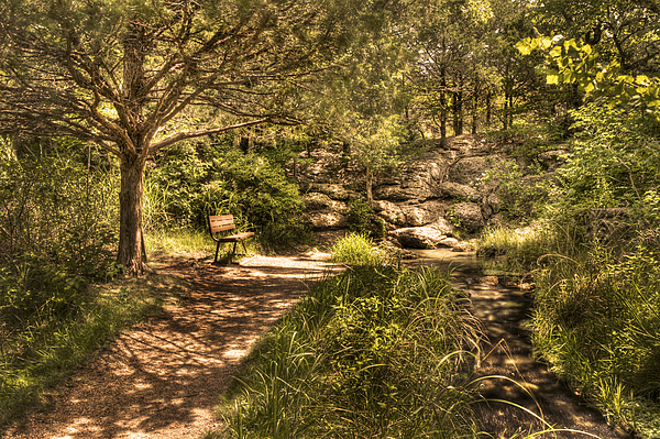 Landscape Photograph - Magic Bench by Tamyra Ayles
