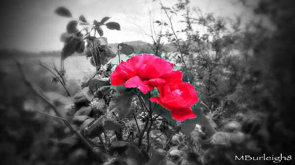 Flower Photograph - Magic Flower by Michael Burleigh