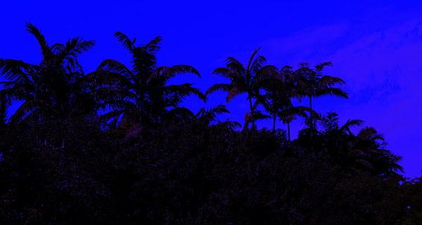 Miami Photograph - Magical Miami by Lessandra Grimley