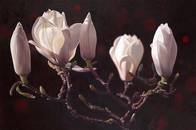 Floral Painting - Magnolia 02 by Edd Cox