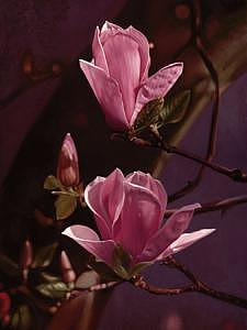 Floral Painting - Magnolia 03 by Edd Cox