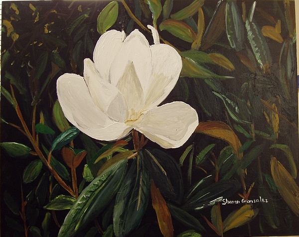 Flower Painting - Magnolia by Sharon  De Vore
