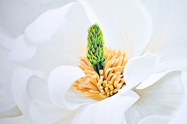 Flower Painting - Magnolia by Tania Kay