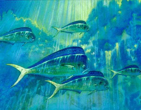 Mahi Mahi Painting by Daniel Bourbonnais