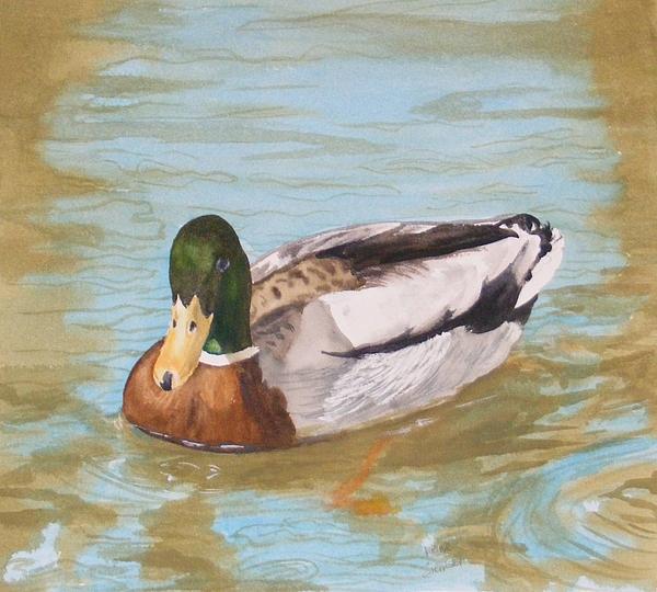 Mallard Drake Painting by Diane Ziemski