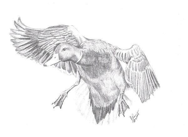mallard drawing mallard duck by joann renner