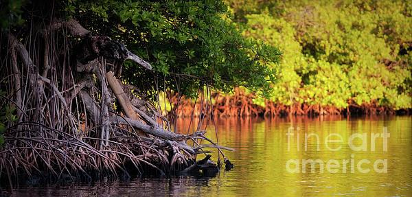 Roatan Photograph - Mangroves Of Roatan by Doug Sturgess