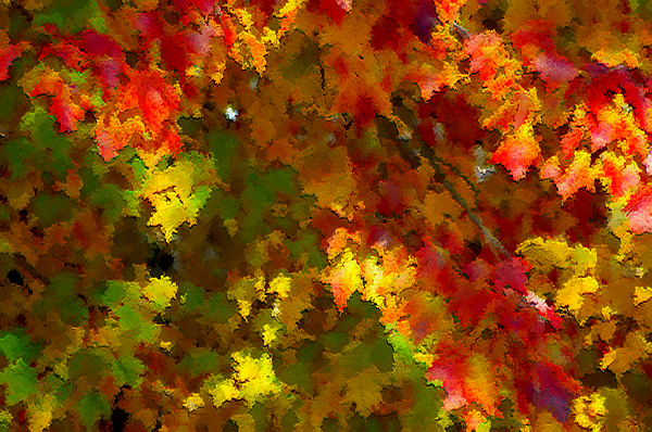 Maple Photograph - Maple Abstract by Scott Washburn