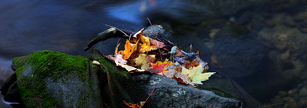 Landscape Photograph - Maple Leaves-0004 by Sean Shaw