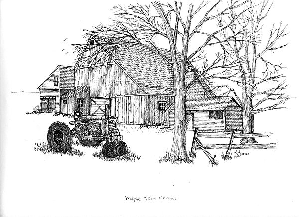 Maple Tree Farm Drawing by Jack G  Brauer