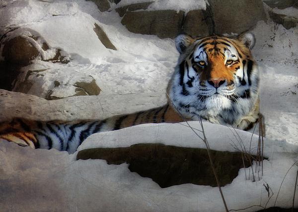 Amur Tiger Photograph - Mara by Lori Deiter