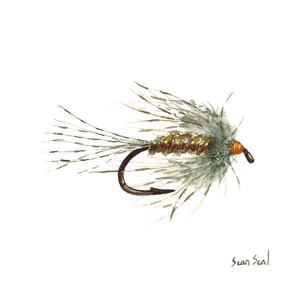 Fishing Painting - March Brown Spider by Sean Seal