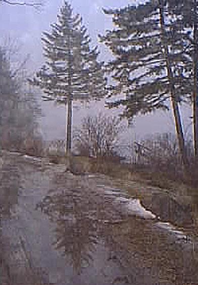 March Fog Photograph by Sue Hartman