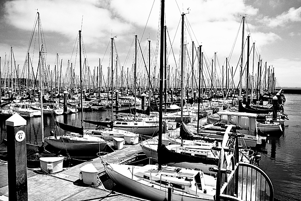 Sailing Photograph - Marina In Black And White by Sean Gillespie