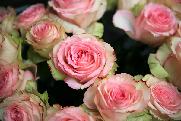 Flowers Photograph - Market Roses by Rodger Helwig