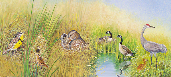 Bird Painting - Marsh Nests by Shari Erickson