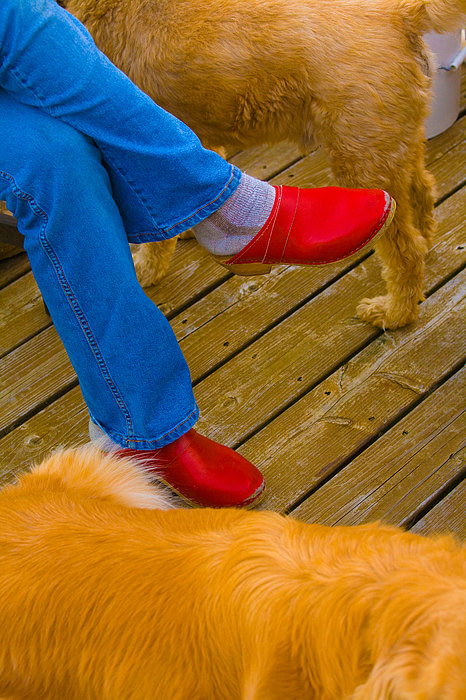 Shoes Digital Art - Marys Red Shoes by John Toxey
