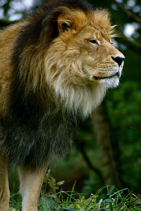 Zoo Photograph - Master Of The Kingdom by Sonja Anderson