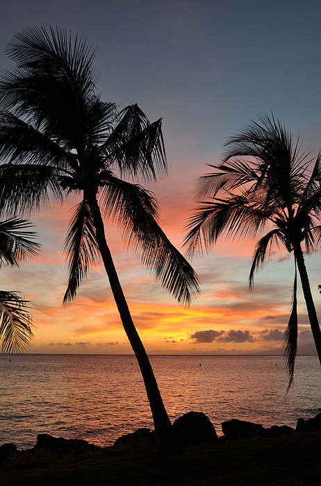 Maui Sunset Palms Photograph - Maui Sunset Palms by Kelly Wade