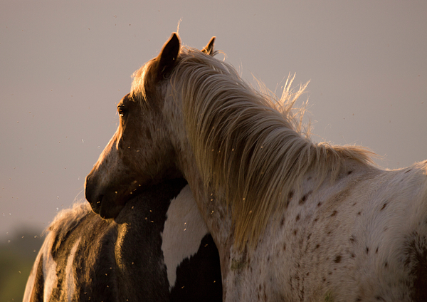 Horse Photograph - Me And My Flies by Angel  Tarantella