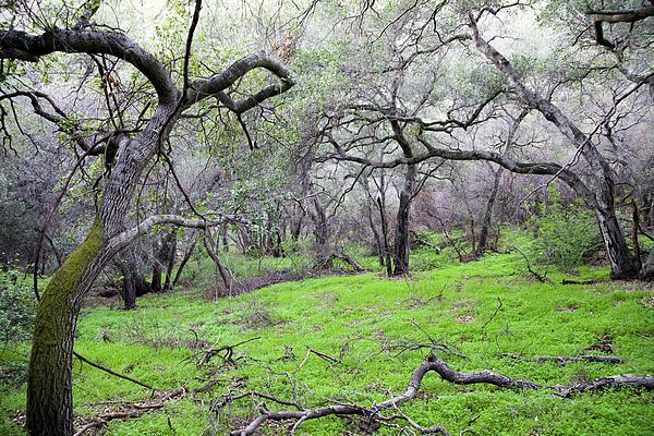 Landscape Photograph - Meadow by Gilbert Artiaga