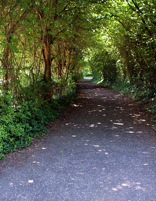 Ireland Photograph - Meandering Way by Michael  Cryer