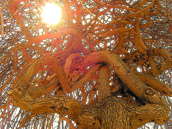 Tree Photograph - Medusa Arboraceous by Robert  Collier