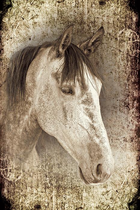 Horse Photograph - Meet The Andalucian by Meirion Matthias