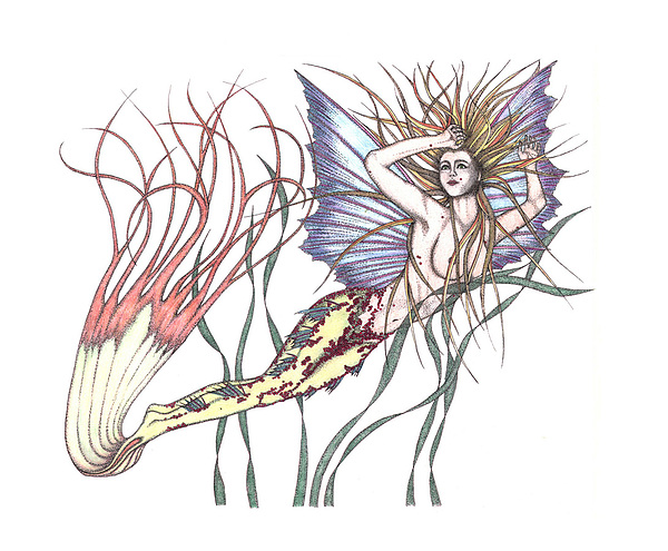Mermaid Drawing - Mermaid Sea Maiden Calypdo by Marjorie Smith