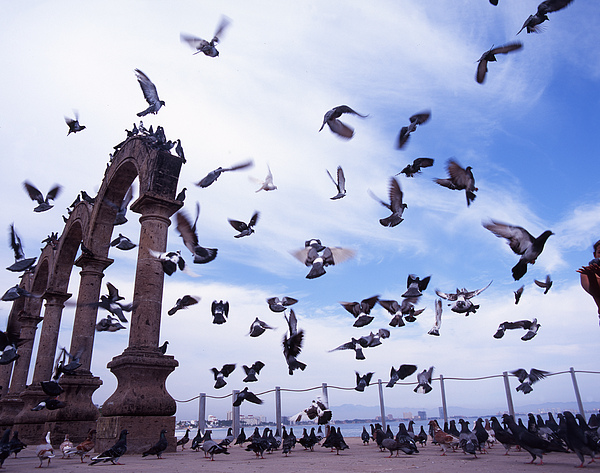 Pigeons Photograph - Mexican Pigeon Ruins by Benjamin Garvey