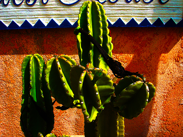 Mexico Photograph - Mexican Style  by Susanne Van Hulst