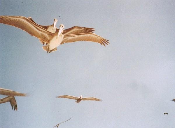 Bird Photograph - Mexico by Laura Burchfield