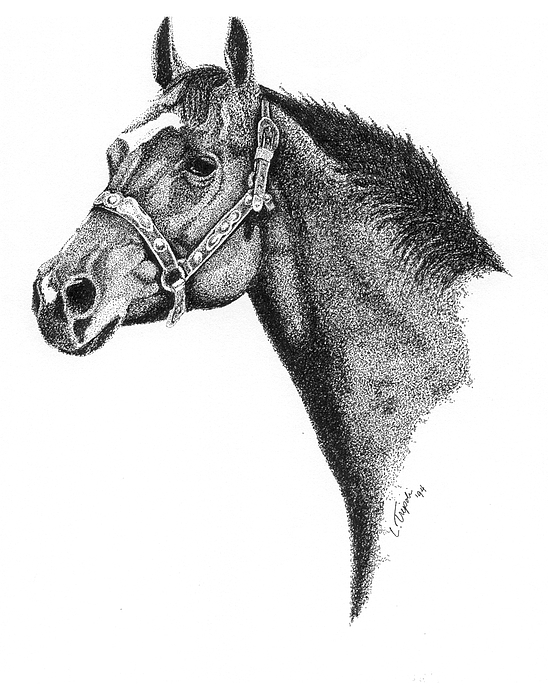 Horse Drawing - Midnight by Lawrence Tripoli