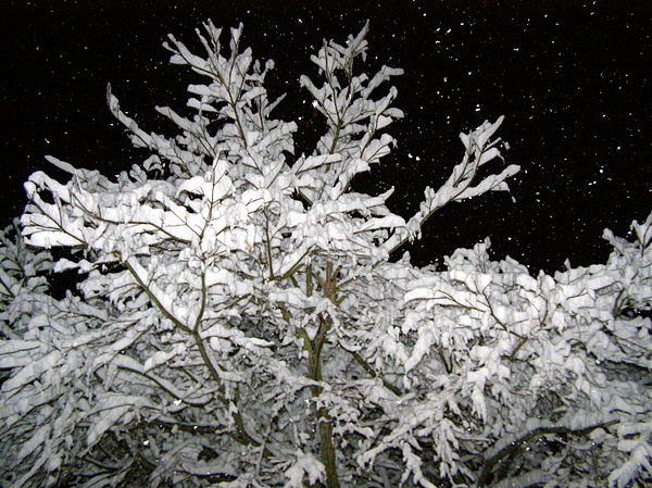 Winter Photograph - Midnight Snow 4 by Christine Sullivan Cuozzo