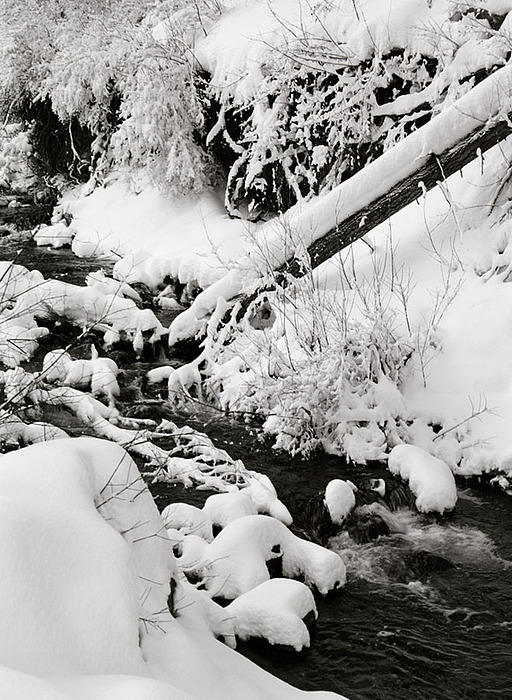Mill Creek Photograph - Mill Creek Canyon In Winter by Dennis Hammer