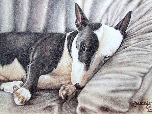Dog Drawing - Mini Bulldog Terrier by Nicole Zeug
